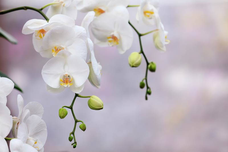 mid-jersey-endodontics-group-orchid